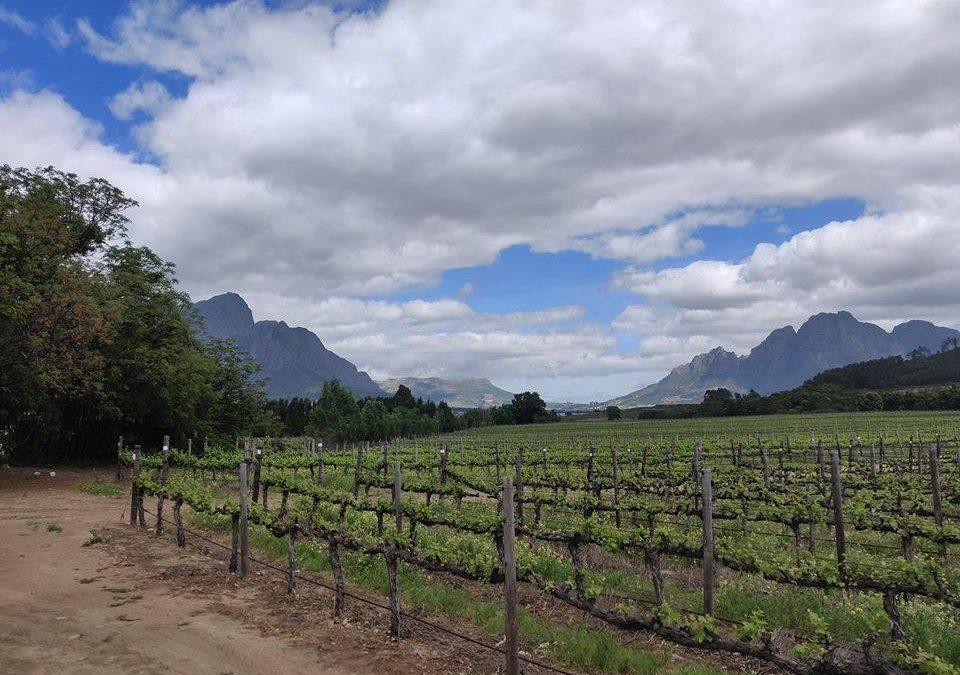 Élmények Dél-Afrikából